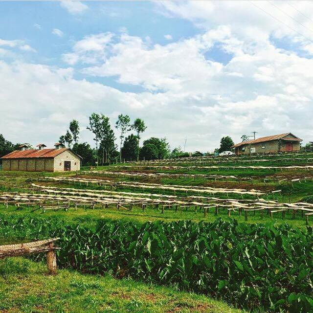 kenyafarm