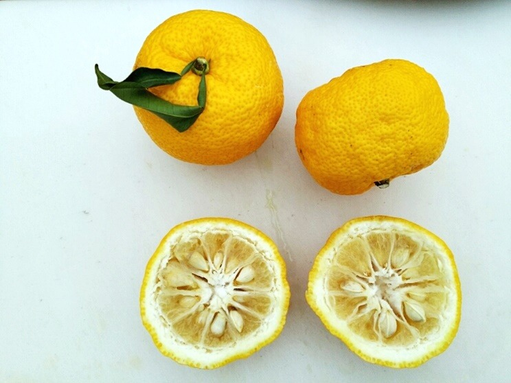 Citrus_junos_fruits