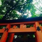 Kansai Area Highlights: Fushimi Inari Taisha and Cheese Yakisoba