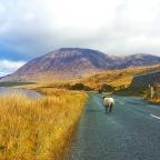 The Misadventures of Driving in Ireland