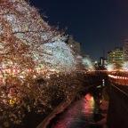 Meguro River: sakura and street food pink heaven